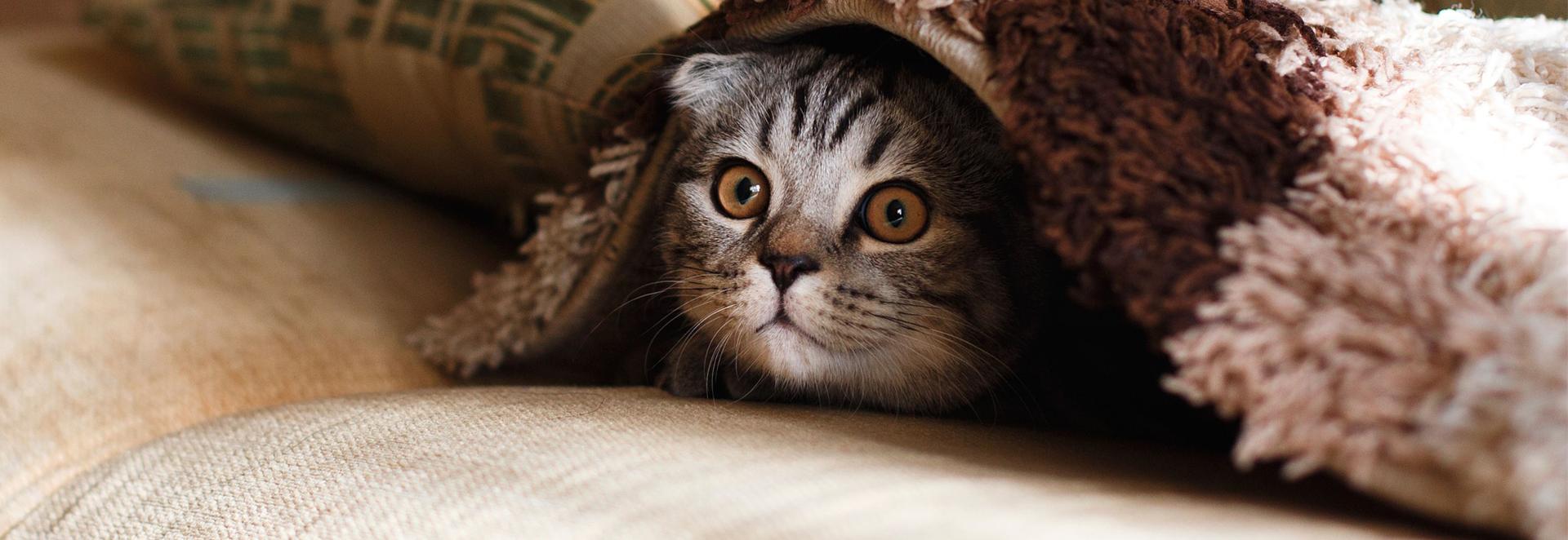 co oznacza mruczenie kota?